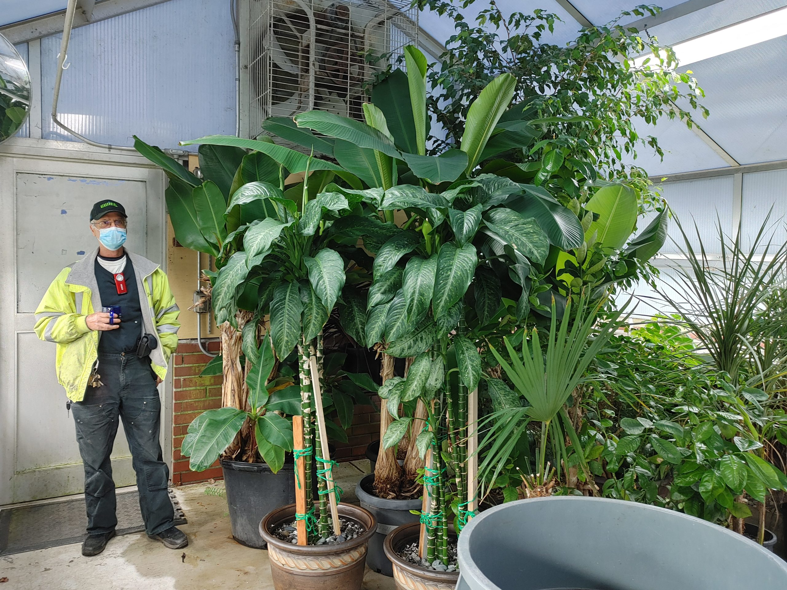 John Syson standing next to tall dieffenbachia plants